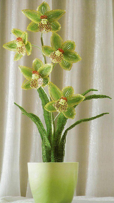 Орхидея бисерная